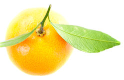 One mandarin with green leaves Stock Photos