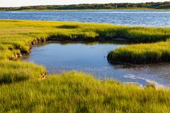 One of the many Bays of Chappaquiddick Massachusetts. One of the many Bays of Chappaquiddick on Chappaquiddick island in Massachusetts. Reachable by boat from royalty free stock photo