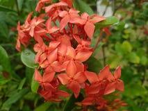 Beautiful Bloom stock photo