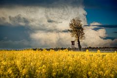Hunting pulpit, rape and cumulonimbus. One of the many Myśmiński pulpits in the Lublin region. Photograph taken in May 2018. Beautiful cumulonimbus in the Stock Photos
