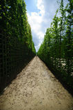 Pathway in Versailles Royalty Free Stock Image