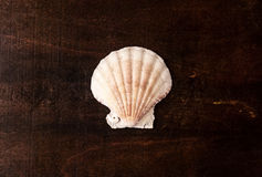 One marine scallop. Royalty Free Stock Image