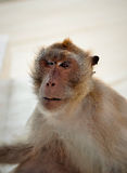 One, Monkey Stock Photo