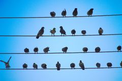 Young birds, a symbol of peace royalty free stock image