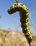 One of the most beautiful and best types of worms stock photography