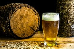 One mug of beer on a wooden table. A glass of beer on a wooden table with barley and two stumps in the background Royalty Free Stock Photo