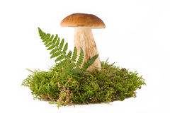 One mushroom Royalty Free Stock Photos