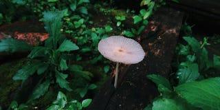 One Mushroom stock photos