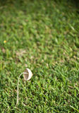 One mushroom in the garden Royalty Free Stock Photos
