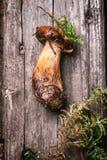 One mushroom Stock Images