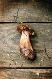One mushroom Stock Photo