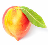 One nectarine fruit Royalty Free Stock Photos