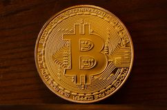 One new golden physical bitcoin is lies on dark wooden backgound, close up. High resolution photo. Cryptocurrency mining concep. T Royalty Free Stock Image