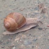 One nice snail. Some cute snail Royalty Free Stock Images
