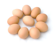 One in Nine cycle egg Stock Photography