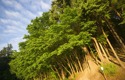 One No Something Sign Short of Perfection Forest Trees Stock Photography