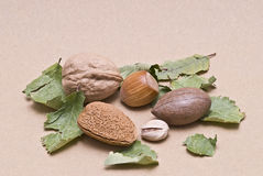 One nut of each type. Stock Images