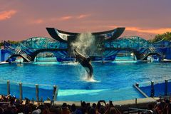 One Ocean SeaWorld`s signature killer whale show on beatiful sunset sky backround. stock photo