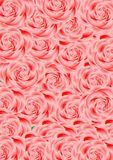 One-off roses. Royalty Free Stock Photos