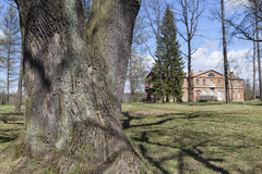 One of the old oaks that were planted in honor of the birth of children. Manor Priyutino. Leningrad region. Stock Images