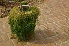 An old pot overgrown with green vegetation stands on a brown sidewalk. One old pot overgrown with green vegetation stands on a brown sidewalk on the street stock images