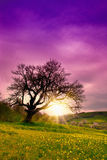 One old tree Royalty Free Stock Photography