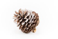 One open pine cone sprinkled with snow on a white background. One open pine cone sprinkled with a touch of snow on a white background in the winter season royalty free stock photos