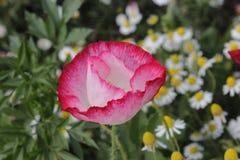 One Opium stock photos