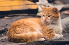 One orange cat Stock Photo