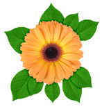 One orange flower with green leaf Stock Photo