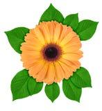 One orange flower with green leaf Stock Photo
