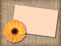 One orange flower with message-card Royalty Free Stock Photos