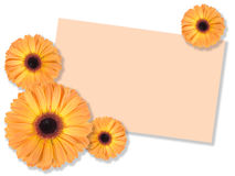 One orange flower with message-card Stock Image