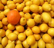 One Orange, Many Lemons Royalty Free Stock Images