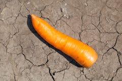 One organic fresh carrots Stock Photos
