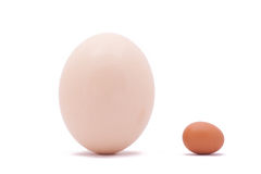 One ostrich and chicken egg. One big white ostrich and chicken egg on white background Stock Photos