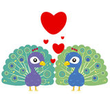 One pair of cute peacocks Stock Images