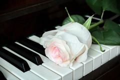 One pale pink rose is lying on old piano keyboard. Royalty Free Stock Photos