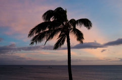 One palm against sunset sky Royalty Free Stock Photos