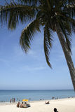 One palm tree. A romantic seascape in Varadero at Cuba Royalty Free Stock Photography