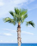 One palm tree on the background of blue sky and sea Stock Images