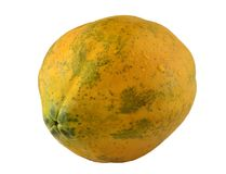One papaya. Stock Photography