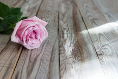 One pastel rose on wooden background. One pastel rose on grey wooden background Stock Images
