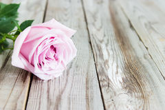 One pastel rose on wooden background. One pastel rose on grey wooden background Royalty Free Stock Photo