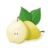 One pear and half of pear. Vector illustration Stock Photo