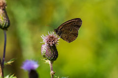 One perfect day. Butterfly on the wild flower. Macro photography of wildlife Stock Image