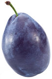 One perfect plum. Royalty Free Stock Photography