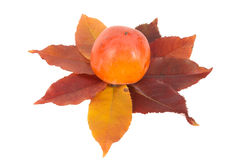 One persimmon and autumn leaves. Stock Photo