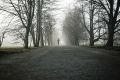 One person running through the forest in the fog royalty free stock photo