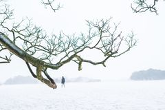 One person walking in a heavy snowy day royalty free stock photography